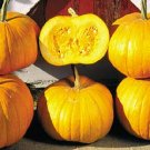 PUMPKIN**CORNFIELD PUMPKIN*****HEIRLOOM***10 SEED