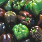 SWEET BELL PEPPER***CHOCOLATE BEAUTY***HEIRLOOM***20 SEED