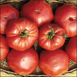 TOMATO***RED BRANDYWINE****HEIRLOOM*****10 SEED