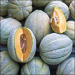 MELON**PRIDE OF WISCONSIN***HEIRLOOM***30 SEED