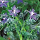 BORAGE***HERB**HEIRLOOM******50 SEED