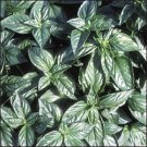 SWEET BASIL*GENOVESE**HEIRLOOM & ORGANIC**100 SEED