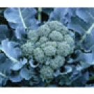 BROCCOLI*DE CICCO***HEIRLOOM& ORGANIC**100 SEED