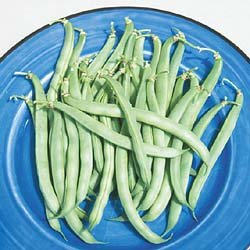 BEAN-GREEN STRINGLESS**HEIRLOOM***50 SEED