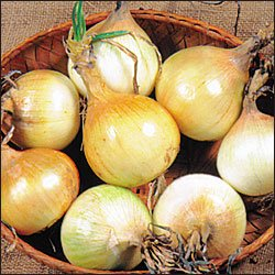 ONION-AUSTRALIAN BROWN***HEIRLOOM***75 SEED