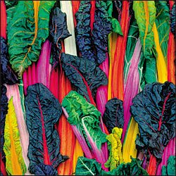 SWISS CHARD-FIVE COLOR SUGAR BEET**HEIRLOOM & ORGANIC***100 SEED