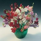 SWEET PEA-ROYAL MIX***NEIRLOOM****150 SEED