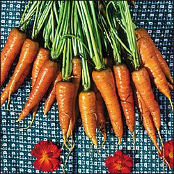 CARROT-ST. VALERY***HEIRLOOM****2,000 SEED