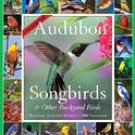 365 Audubon Songbirds a Year 2008 Wall Calendar