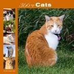 365 Days of Cats 2008 Wall Calendar