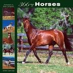 365 Days of Horses 2008 Wall Calendar