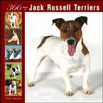 365 Days of Jack Russell Terriers 2008 Wall Calendar