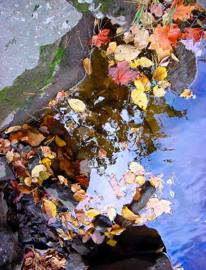 Fall leaves--#4