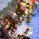 Fall leaves--#4