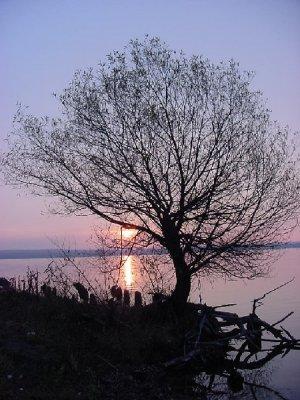 Mason Michigan Sunset