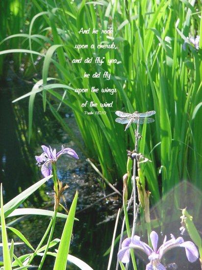 "Dragonfly Wings**8""x10"" **Framed Art**Psalm 18:10"