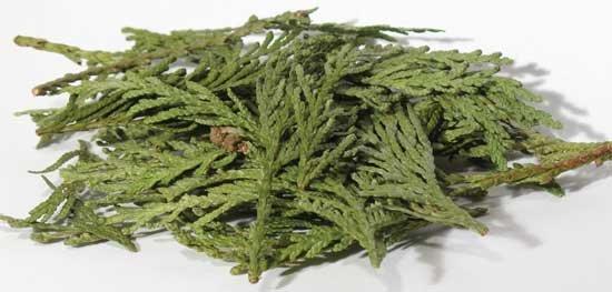 1lb Cedar Tips
