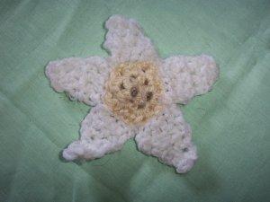 Lil Daisy Catnip Flower Power