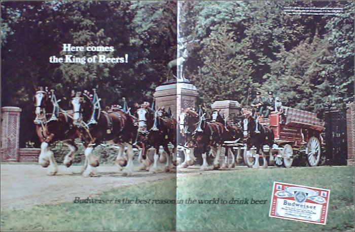1966 Budweiser Beer Clydesdale ad