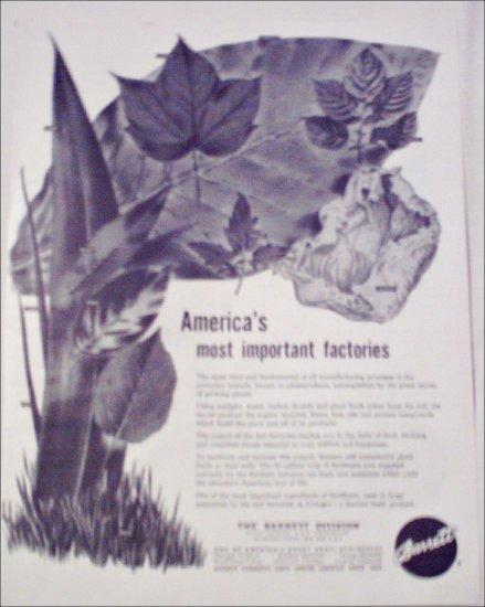 Barrett Division ad