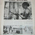 1951 Natural Rubber Bureau ad