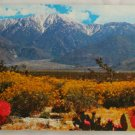 """Desert Wildflowers"" VINTAGE POSTCARD Southwest US"