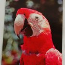 """Parrot Jungle""  VINTAGE POSTCARD Miami Florida"