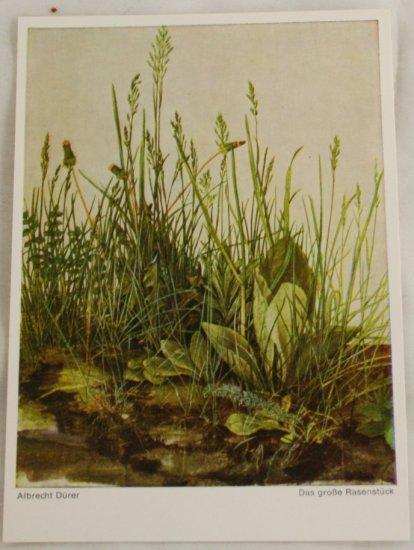 POSTCARD Germany-Albrecht Durer-Grasses, Leaves