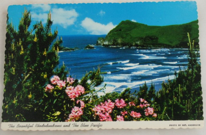 POSTCARD Oregon Coastline, Rhododendrons, Pacific