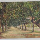 Hand Colored Postcard VINTAGE POSTCARD Southern CA