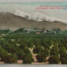 Hand Colored Postcard VINTAGE POSTCARD Orange Groves