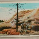 White Border-VINTAGE POSTCARD-Yellowstone-Pulpit Terrace