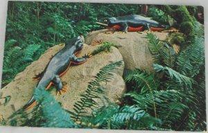 POSTCARD USA Oregon,Prehistoric Gardens,Coast Hwy 101 ROADSIDE ATTACTION