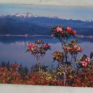 POSTCARD USA Washington,Hood Canal,1955