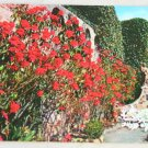 POSTCARD California,Mission San Juan Capistrano Flowers