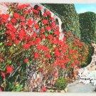 POSTCARD California,Mission San Juan Capistrano Flowers