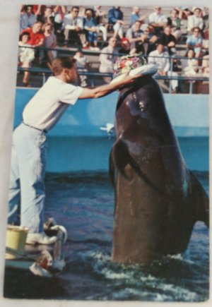 POSTCARD California,Los Angeles,Marineland of the Pacific