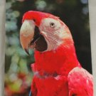 POSTCARD Florida,Miami,Parrot Jungle,Parrot