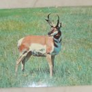 VINTAGE POSTCARD Animals,Antelope 1970