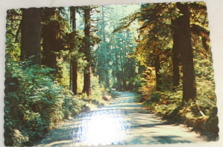VINTAGE POSTCARD Washington,Olympic Peninsula,Hoh Forest