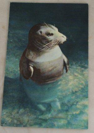 VINTAGE POSTCARD Seal, Oregon Curteich