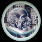 Halloween ANATOMY of a SKULL Head on Stand Ceramic Drawer Knobs