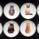 Ceramic Drawer Knobs Pulls ~ DOMESTIC CAT Cats SET Assortment Tuxedo Tabby