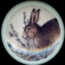 JACK RABBIT in GRASS Ceramic Drawer Knobs