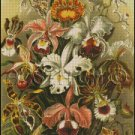ORCHIDS cross stitch pattern