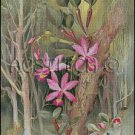 CATTLEYA VIOLACEA cross stitch pattern