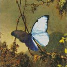 BUTTERFLY  cross stitch pattern No.632