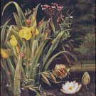 A LILY POND cross stitch pattern