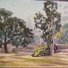 Beautiful Vintage Oak Eucalyptus Tree Landscape Original Painting 16x12 Lillian Becker Artist Signed