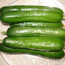 Organic Persian Cucumber seeds(30)guarantee grow-